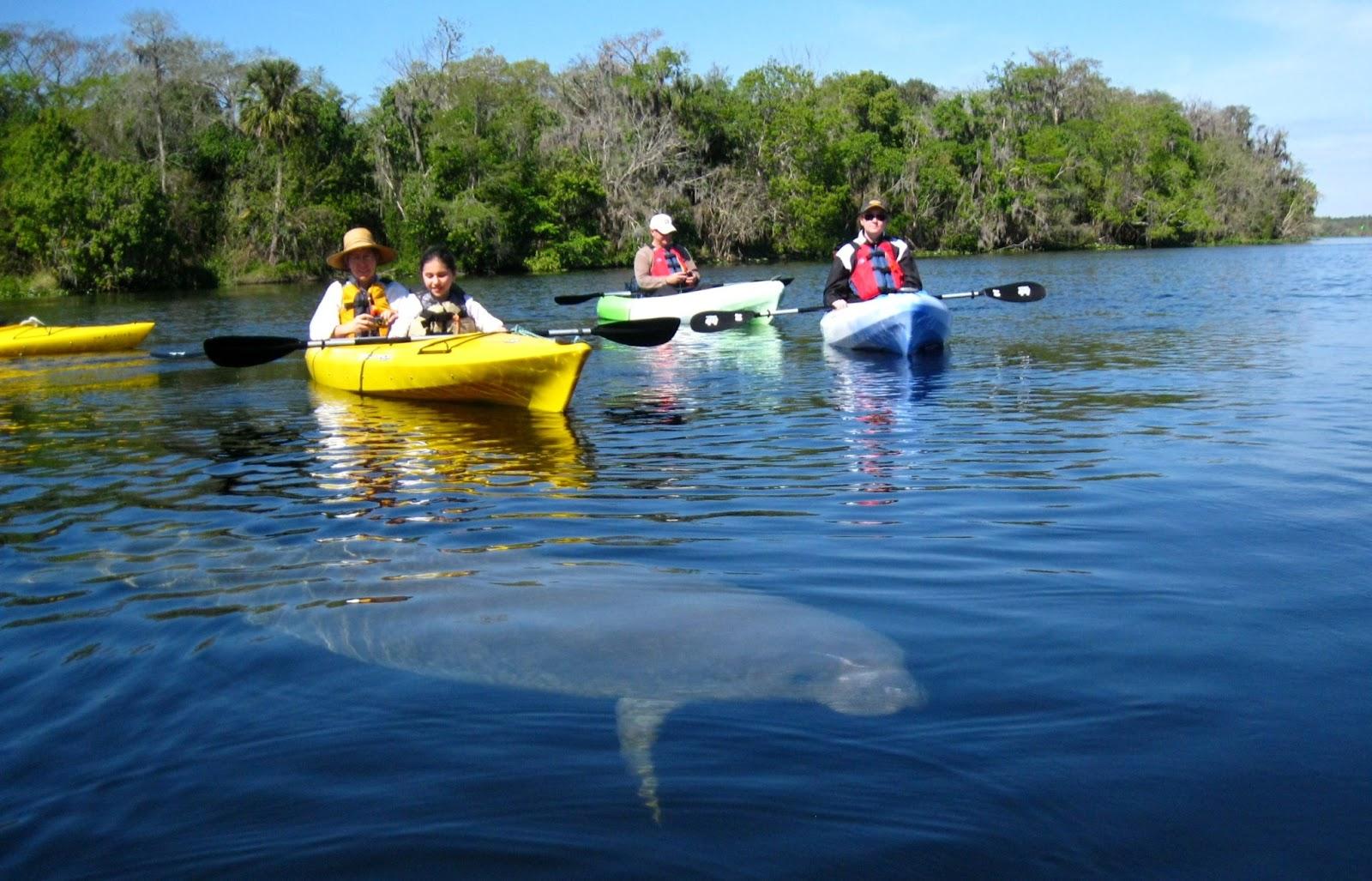 Fotografía cortesía de Orlando Kayak Tours